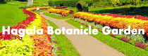 Hagala botanicle garden copy